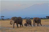 Safari im Amboseli-Nationalpark, im Hintergrund Mawenzi und Kilimanjaro. Foto: Günther Härter.