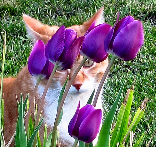 Ziggy Cat - Purple Flowers 4-1-12 04