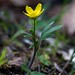 Western Buttercup - Photo (c) Brent Miller, some rights reserved (CC BY-NC-ND)