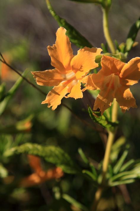 042112_01_flower