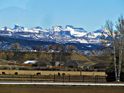 snow mountains colorado cattle pasture montrose sanjuanmountains