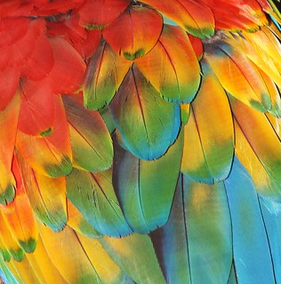 Feather Rainbow