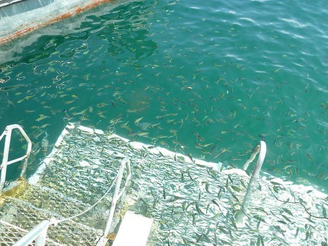 Fish! Pulau Payar