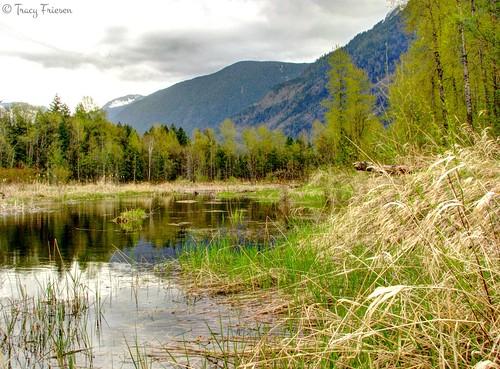 Cheam Wetlands 2