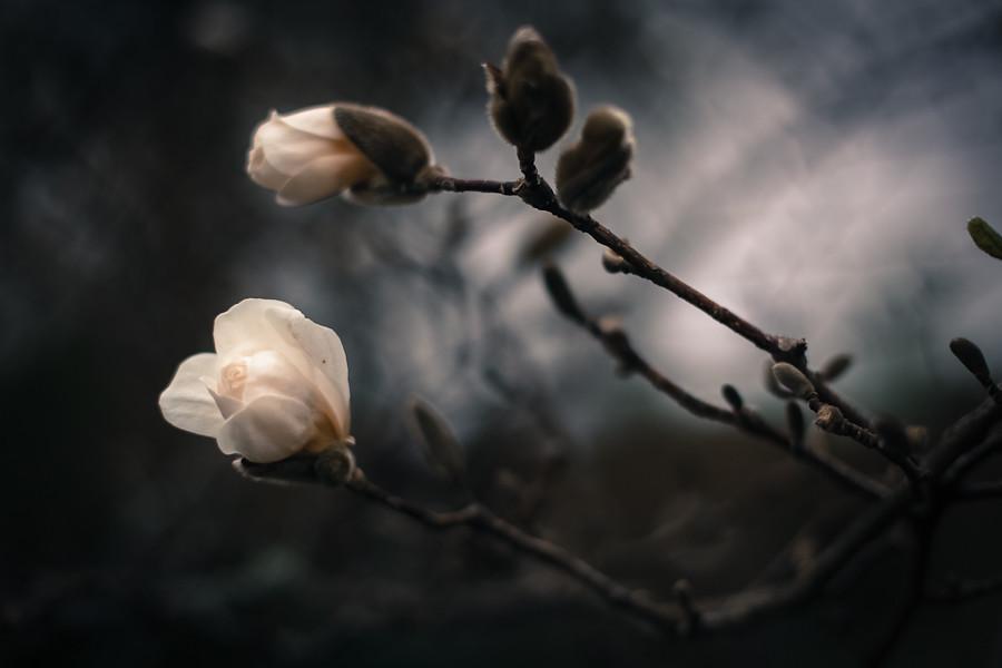 Spring 05