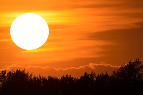 Sun-7229.jpg