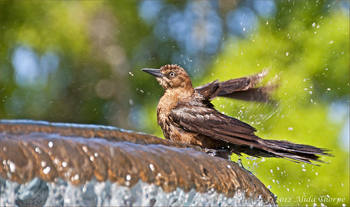 bird bath by Alida's Photos