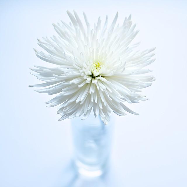 2.2. Hoy he comprado una flor