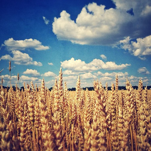 instagramapp square squareformat iphoneography uploaded:by=instagram foursquare:venue=4e6f6266c65b6d433ae20e81 statigram scenery outdoors nature summer field wheat country cloud love farm snapseed