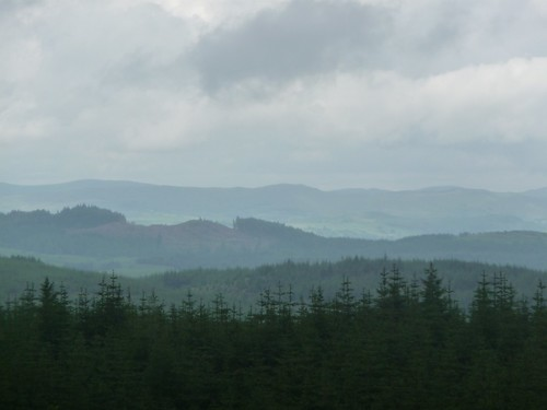 Grizedale forest - Silurian way view
