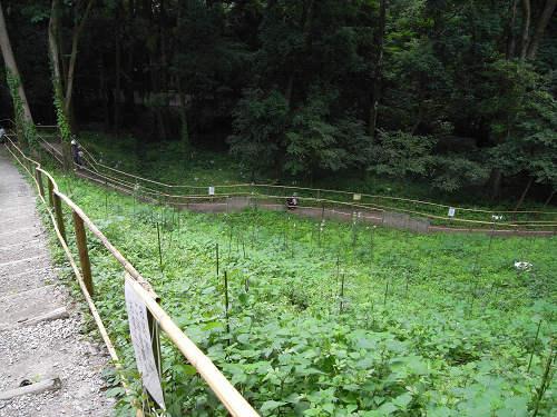 ささゆり園@大神神社-05