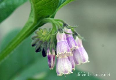 garden_blooms_7