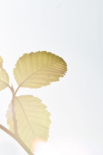 2012_05_CypressFalls_1667