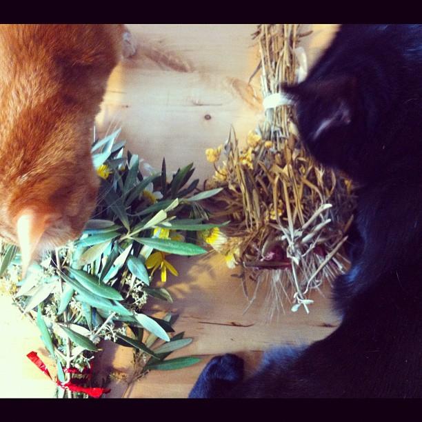 Fígaro e Mecky a atacarem os ramos.