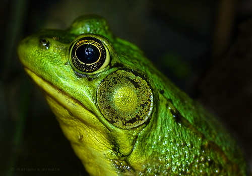 reflected in a green froggie