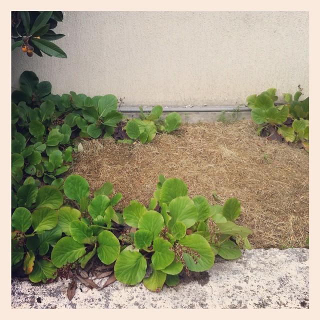 Petit jardin zen 3 flickr photo sharing - Petit jardin zen ...
