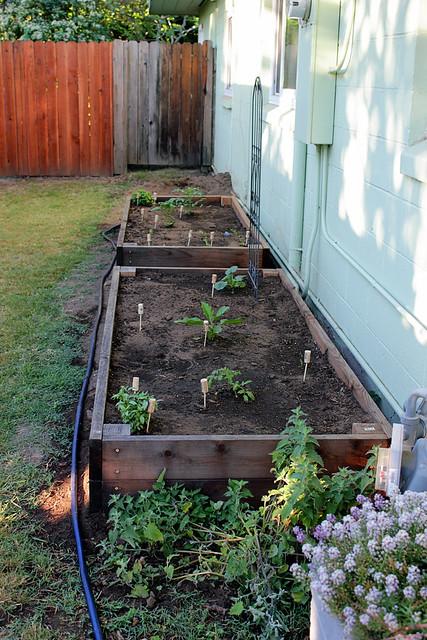 Side yard veg bed