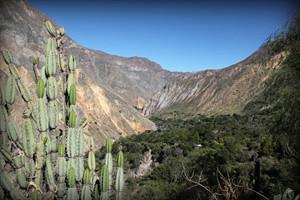 flora-fauna-canyon-del-colca-arequipa