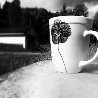 InstaCamp | Sunshine