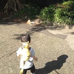 とらちゃんとネコちゃん (2012/6/4)