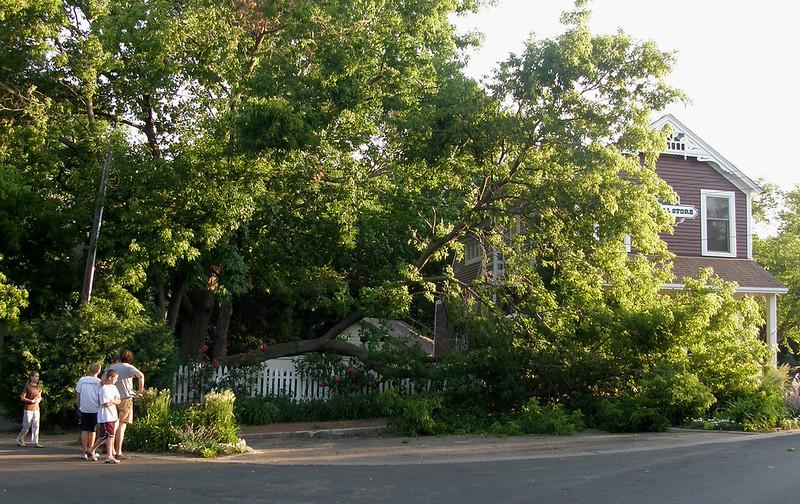 tree down1