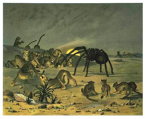 016-La tarantula gigante-Afrika  Studien und Einfaelle eines Malers 1895- Hans Richard von Volkmann- Universitätsbibliotheken Oldenburg