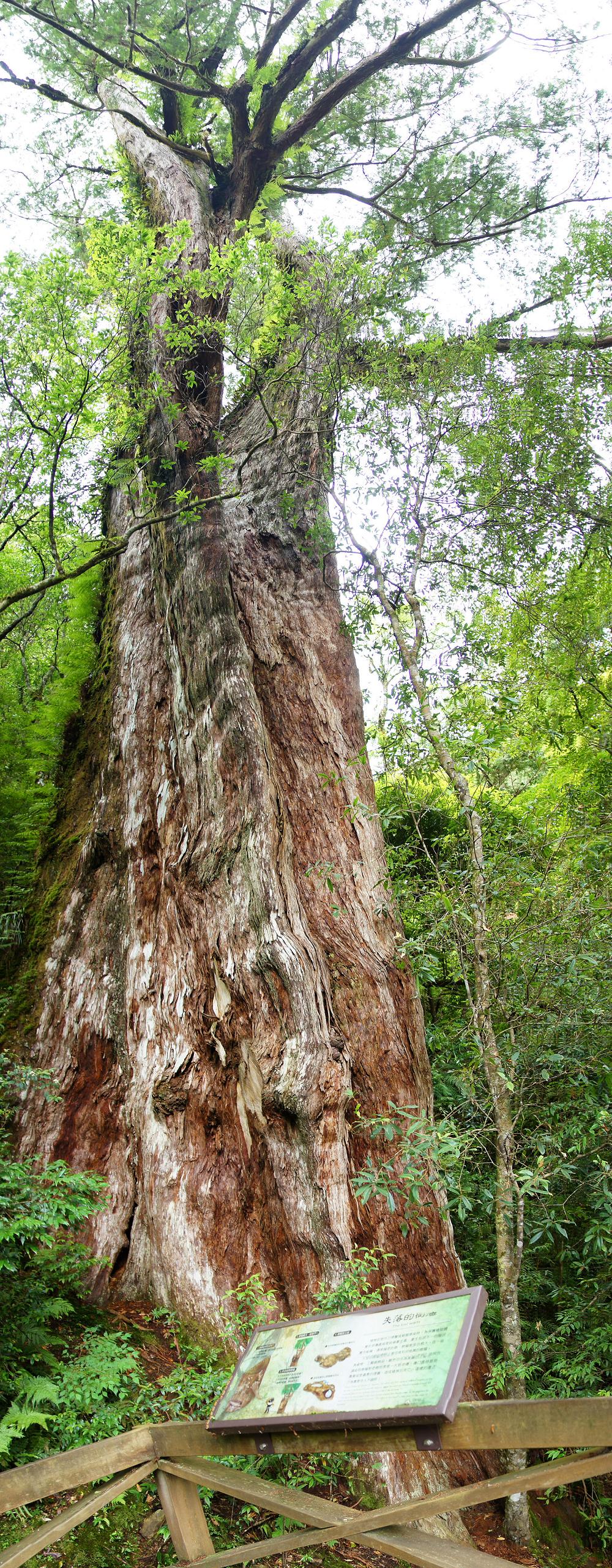 巨木群,與往拉拉山的路上-063