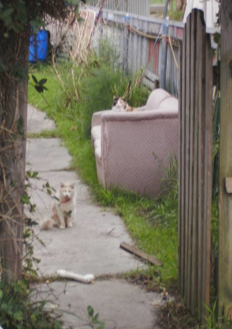 The cats come out of the shed.
