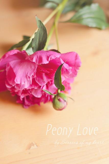 Peony Love