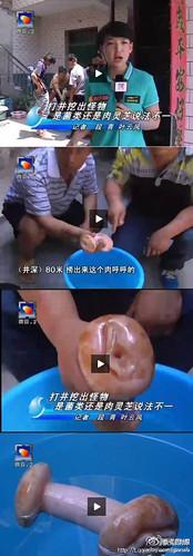 A mystery mushroom was found in Xi'an...