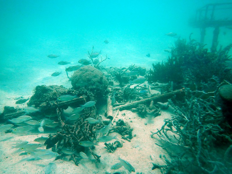 13718829985 74e8cc0117 c PADI Discover Scuba Diving Di Pulau Mamutik, Sabah