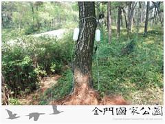 中山林松樹救治(0409)-02