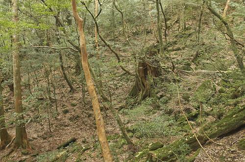【写真】2014 離島めぐり : 白谷雲水峡1/2014-04-12/PICT6155