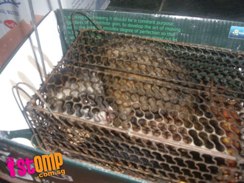 Bungalow owner wants to barbeque civet cat for dinner after it destroyed his phone wires