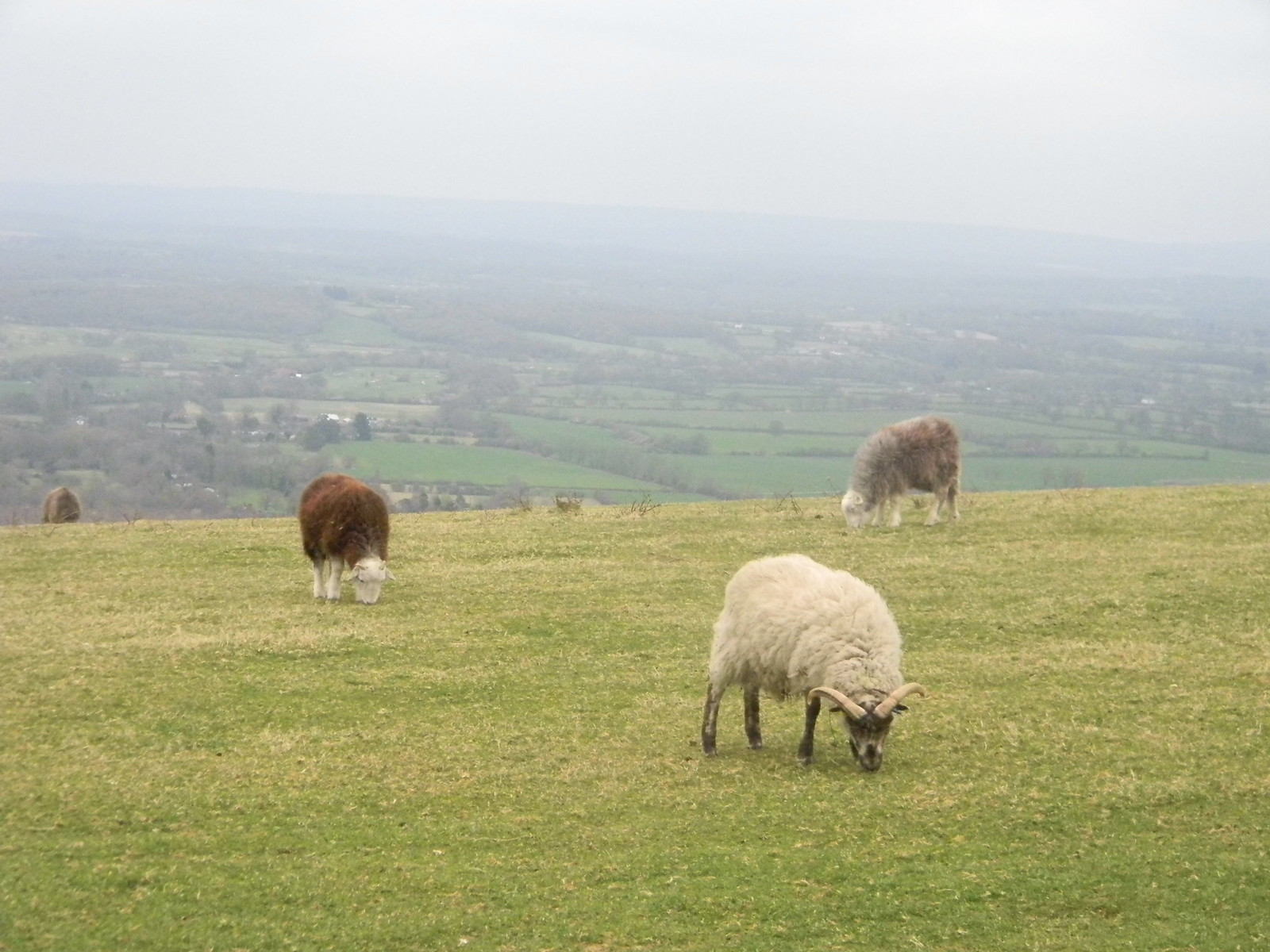 Sheep Hassocks to Lewes