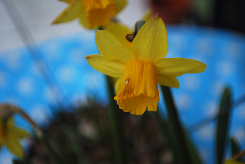 Week In The Life 2012 | The Daffodils