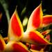 Succulents ©stefanedberg