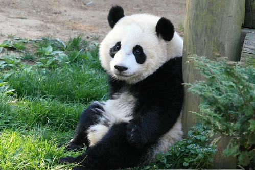 Sweet Little Po...Innocent Cub