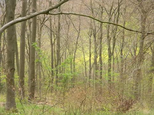 Rapefield through trees