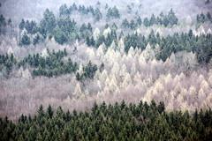 [フリー画像素材] 自然風景, 森林, 樹木, 風景 - ドイツ ID:201203291600