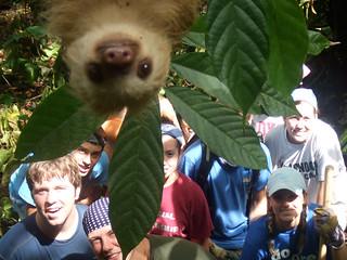sloth_2181276k