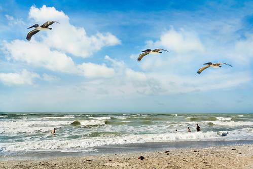 beach pelicans waves florida trio sanibelisland gulfcoast tarponbaybeach