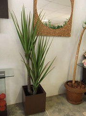 flower arranging(0.0), flower(0.0), floristry(0.0), ikebana(0.0), art(1.0), flowerpot(1.0), floral design(1.0), plant(1.0), houseplant(1.0), interior design(1.0),