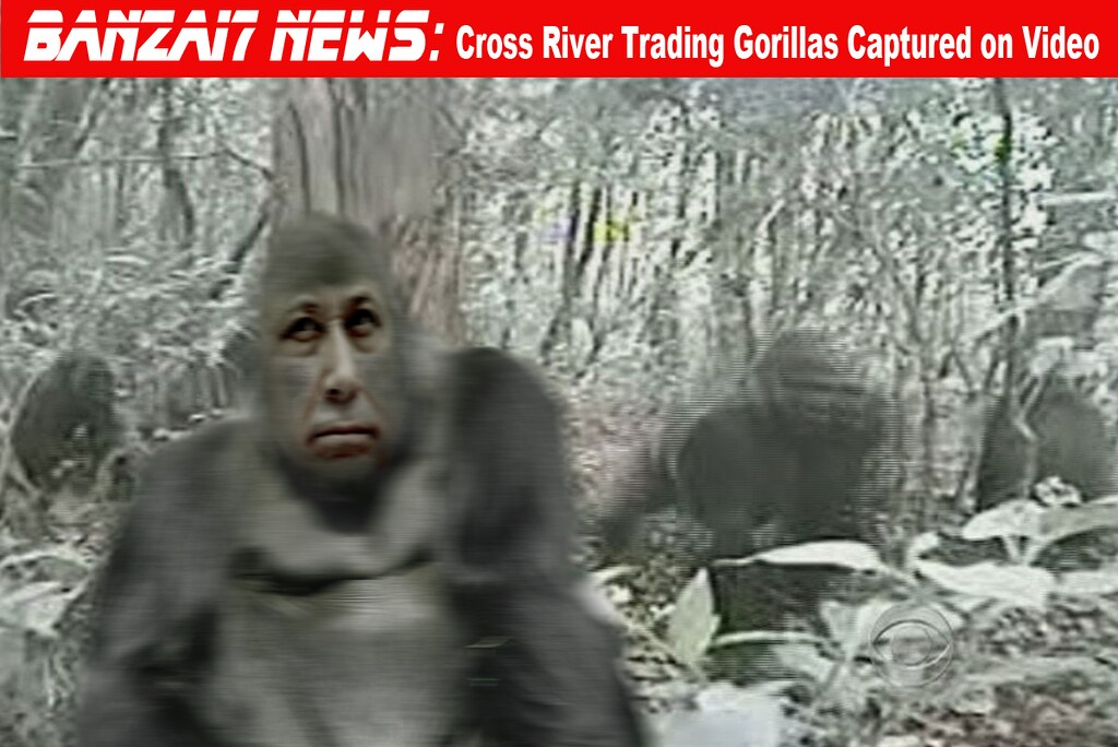 RARE CROSS RIVER TRADING GORILLAS...