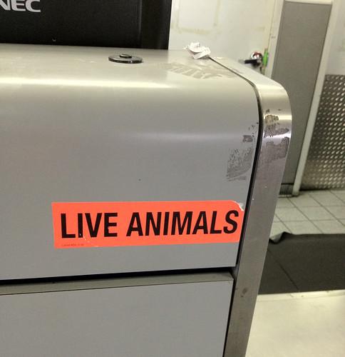 live animals.jpg