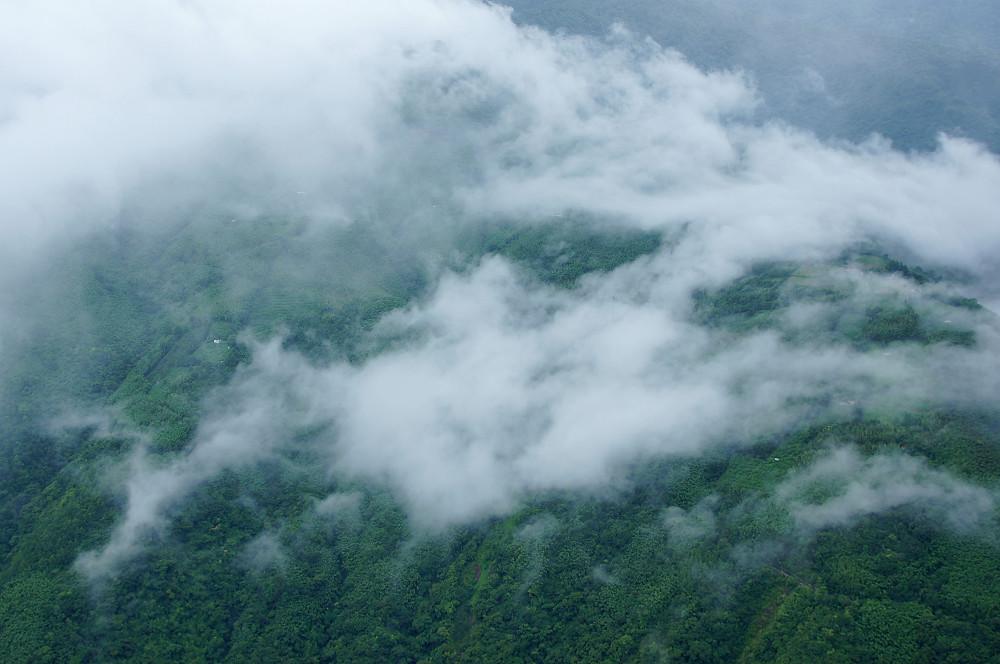 巨木群,與往拉拉山的路上-091