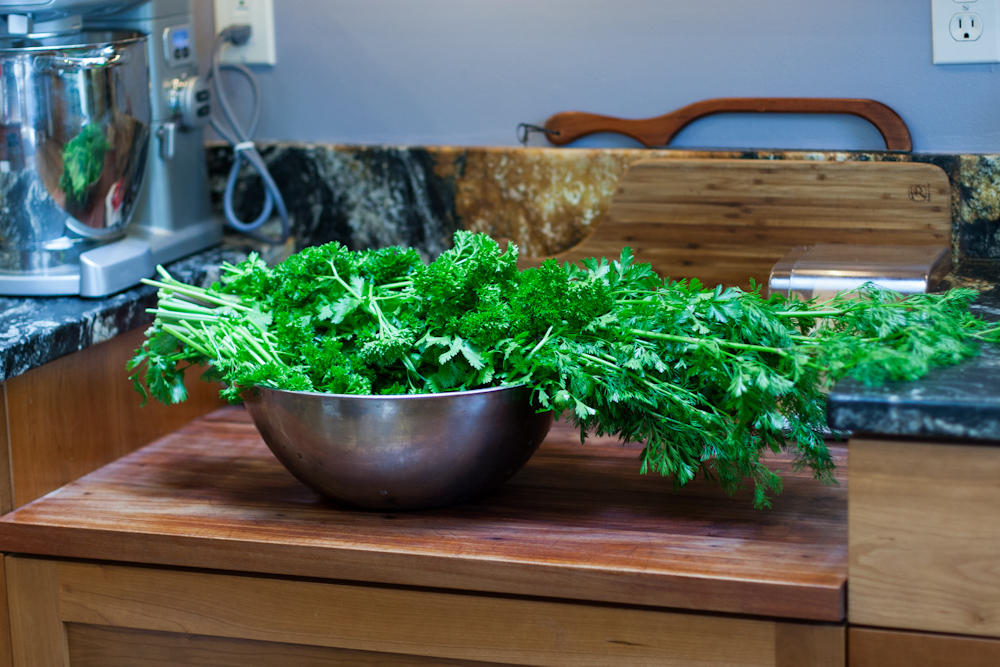 Cilantro and parsley harvest