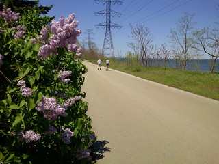 Image of  Hamilton Beach  near  Hamilton. lilacs