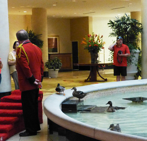 Ducks in fountain at Peabody Hotel, Little Rock