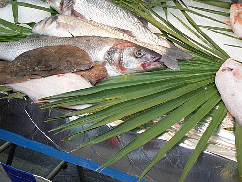 palme et poissons.jpg